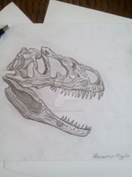Skull of a Allosaurus fragilis by Stegoraptor