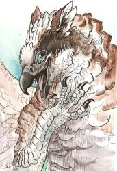 Color Sketch: Osprey Gryphon by caramitten