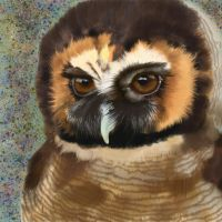 Brown Wood Owl by VisualCondyle