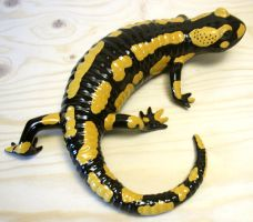 European Fire Salamander by Hippopottermiss