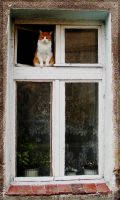 Cat - window's cat - closer by mona-hobbit