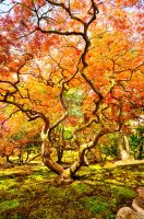 Changing Seasons by TimFranklin