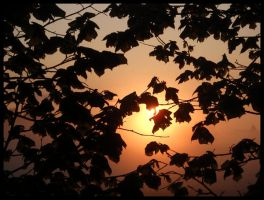 Sunset through leaves by Irkaaa