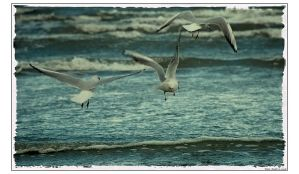 Seagulls by Nakedthoughts