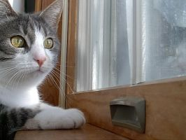 20040409 Kitty in the Window by PetersonPhotos