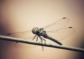 Dragonfly by kojotcement