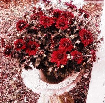 Awesome Red Flowers by ChevelleRose