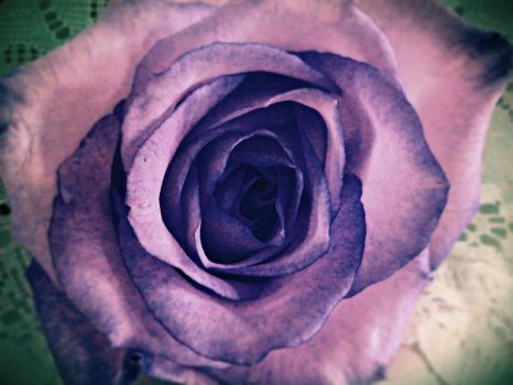 The Rose by TressaMarie2005