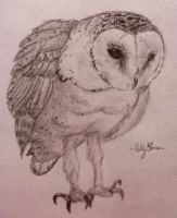 Barn Owl by Marmiexx