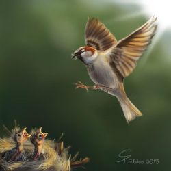 Sparrow - Haussperling by steffchep