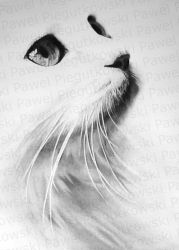 cat-1 _PREVIEW_UPDATED_ by PEPEi