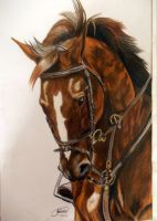 Dressage Horse - Complete by MiDestini