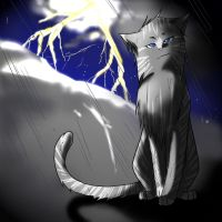 Warrior cats: Rainclaw by WhiteFlameSoul