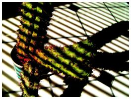 The Cactus 2. by greytrousers