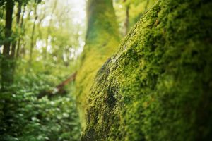 Mossy Tree by Sunstyles