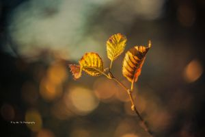 Autumn Leaf by Tb--Photography