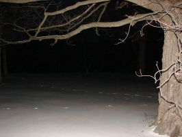 Bare Winter Tree Background 2 by FantasyStock