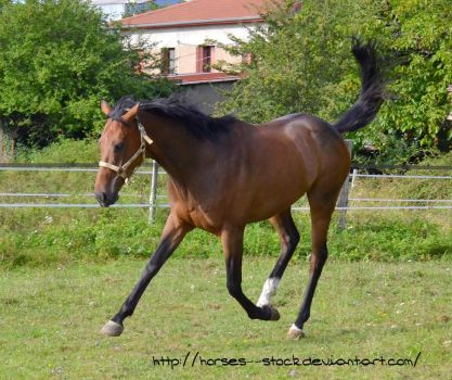 Justification - Stock 17 by Horses--Stock