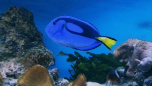 Dory by she-is-so-fly