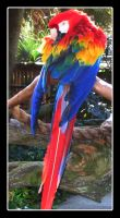Parrot by contenttobe