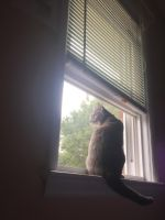 Kitty in the window by MLPMusicgirlpro