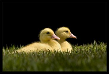 Couple on the grass. by israelfi