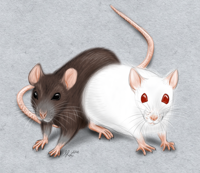 Rats by dragonslairnz