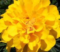 Yellow and lovely by UrbanekDesign