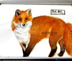 #213 Red fox (vulpes vulpes) by LateAMdoodles