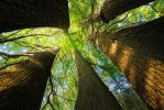 light star from the tree interior by MT-Photografien