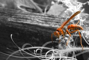 Red Wasp by ce3Design