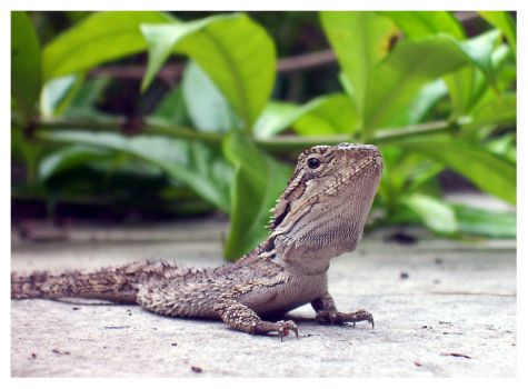 Prickly little lizard by loth