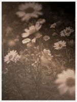 and when flowers gaze at you by gwensaer