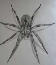 Brown Recluse by purpletad