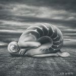 She shell by anapt