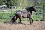 DWP HORSE STOCK 234 by DancesWithPonies