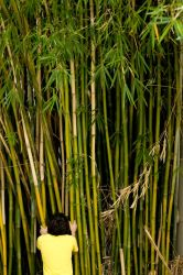 Exploring the Bamboo Forest by Elijah-Snow
