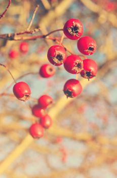 Very Berry by Lodchen-Photography