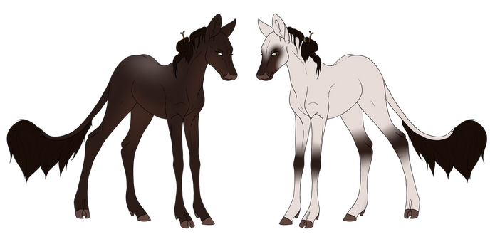 Ruhani | Filly | Blackwood | Herdmember by Windklang