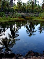 Ancient Fish Pond Reflection by Synaptica