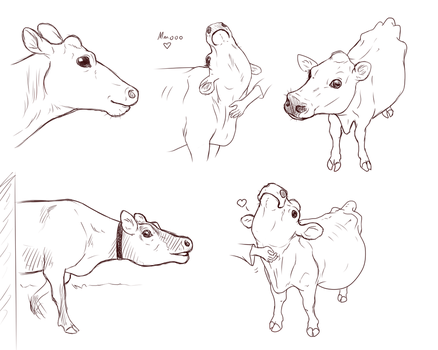 Cow practise sketches I made for a comic by Grey-Terminal