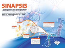 Sinapsis Infographic by AlfredoValle77