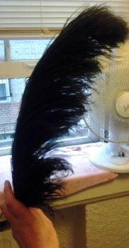 Ostrich feather: After by Lady-Alessandro