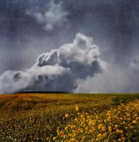 Cloud over field by hearthy