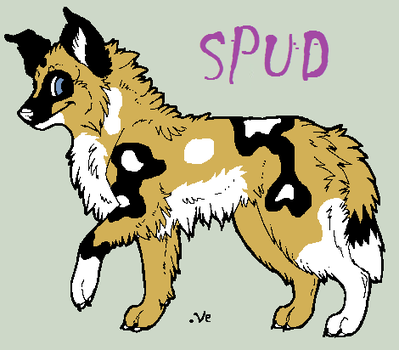 Spud-Profile by TheSheeranKennel