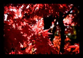 October Leaves by JMarie-Photography