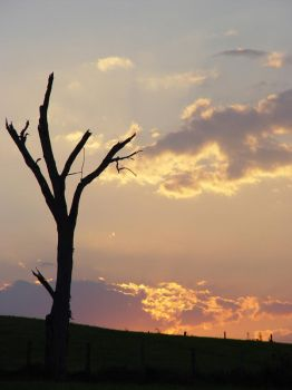 Shedded Tree, Setting Sky. by SixStringLove