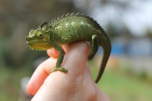 Chameleon by syoul-stock