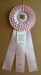 4H Reserve Gr Ribbon Stock by Lovely-DreamCatcher