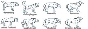 Wolf behavior refferences by Colonel-Motivation